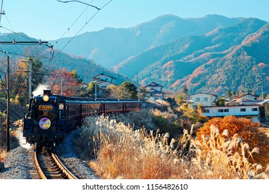 A steam locomotive of Seibu Chichibu Railway travels through the idyllic countryside with fiery autumn trees on the mountainside and gold Miscanthus grass in the field on a sunny day in Saitama, Japan