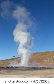 Steam rising out of the ground at Geysers del Tatio, Chilean Andes, Atacama, Chile