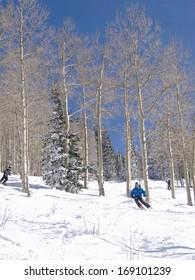 STEAMBOAT SPRINGS, COLORADO - JAN 30 - Skier moves through bare winter aspens on Jan 30, 2010, in Steamboat Springs, Colorado