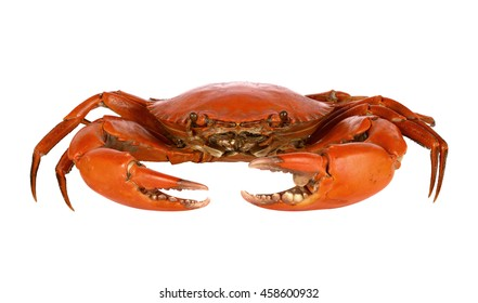 Steamed black crab on white background
