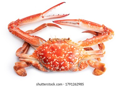 Steamed Blue Crab isolated on white background, Cooked Organic Boiled Crab on white background,
