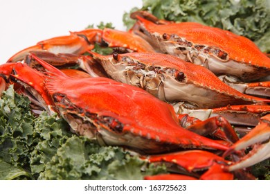 Steamed Blue Crabs, one of the symbols of Maryland State and Ocean City, MD, garnished with kale on white background