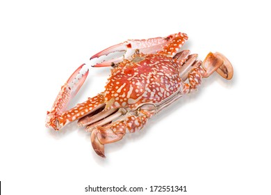Steamed crab seafood isolated on white background