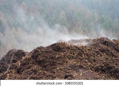 Steaming cow poop