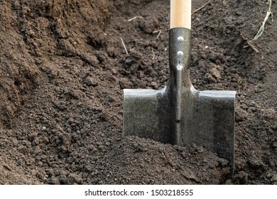 Steel bayonet shovel with a wooden handle. Shovel stuck in the ground.