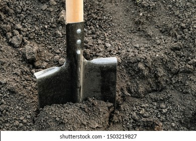 Steel bayonet shovel with a wooden handle. Shovel stuck in the ground. Garden tool.