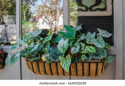 Steel English Hay Basket Window Planter with coco fiber liner filled with plants hanging on painted wood paneling by window reflecting other houses and trees and showing old stained glass