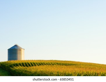 A steel grain bit sits high atop a hill surrounded by a field full of tasseling corn.