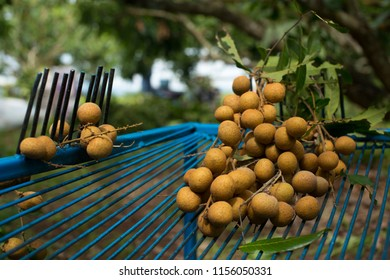 Steel grating Cut fruit (Longan) of Thai craftsman For Cut longan, To make dried longan.