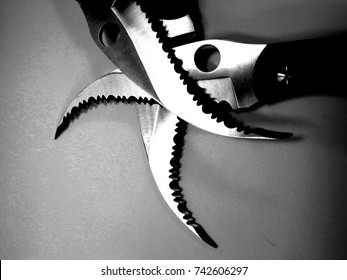 Steel karambit knife blade on white background. Close up of blade knife.