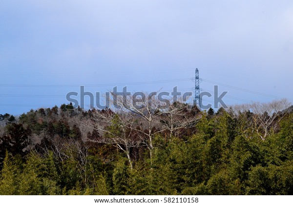 Steel tower and forest.