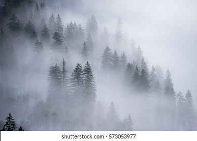 The steep lake shore covered with fir trees in foggy morning, Konigssee, Germany