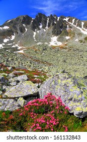 Steep rocks covered by pink flowers in summer