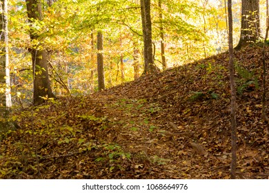 A steep trail climbs through fallen leaves and over roots in a forest in early autumn