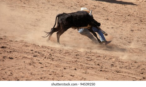 Steer wrestling at rodeo in Arizona, USA/Dig in the Heels at Rodeo Event/A determined steer wrestler at a dusty rodeo competition in the desert Southwest USA.