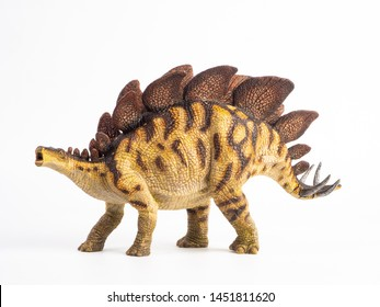 Stegosaurus Dinosaur on white background .