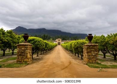 Stellenbosch wine region close to Cape Town in South Africa