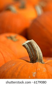 Stem of a large pumpkin