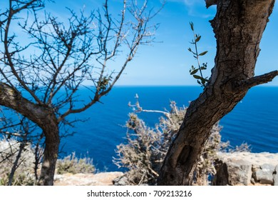 Stem of old olive tree in front of sea