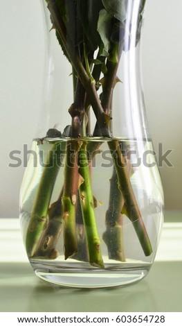 Stems Flowers Vase Water Stock Photo Edit Now 603654728 Shutterstock