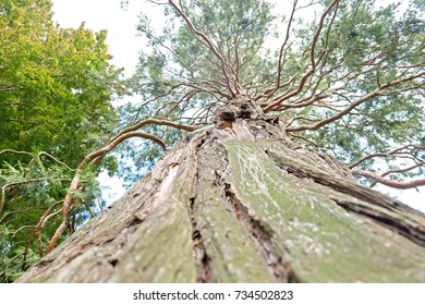 Stems and Leafs and Branches of Big Old Tree