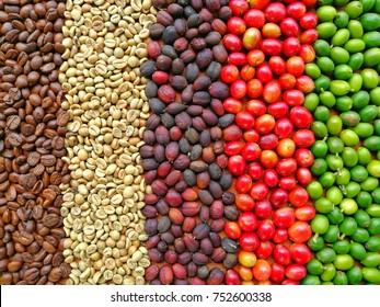 Step and Circle of Coffee Bean, Paksong Plateau Laos Coffee Beans, Mixed café Beans Robusta and Arabica, Food and Drink Texture Background