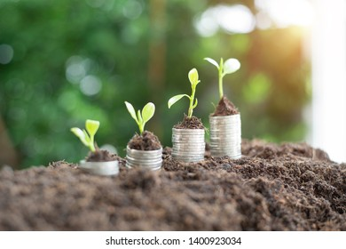 step of coins stacks with tree growing on top, nature background, money, saving. - Image