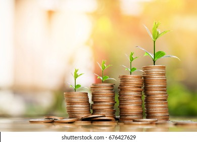 step of coins stacks with tree growing on top, nature background, money, saving and investment or family planning concept, over sun flare silhouette tone.