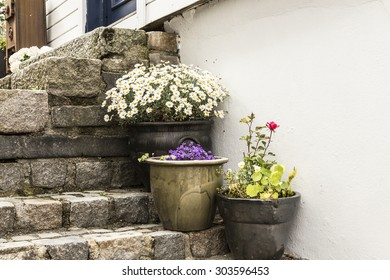Step flowers,