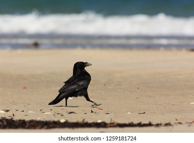 Crow´s step on the beach
