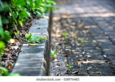 Step at a side of garden walkway made of brick block covered with fallen leaves with tree or bushes on the side.