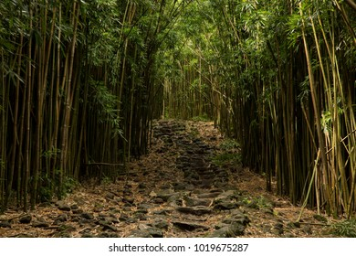 Step way in bamboo forest