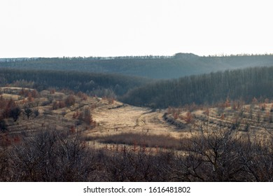 steppe from above, steppe and forest beam in the fog, autumn