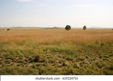 Steppe between Bloemfontein and Ladybrand, Free State, South Africa