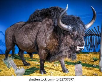 Steppe Bison in Ice Age Safari Exhibition. Kunsthalle in Leoben, Austria, May 27, 2017,