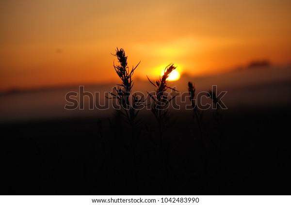 steppe grass at dawn