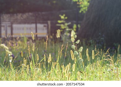 Steppe grass at sunrise, bright sunny day