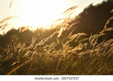 Steppe grass at sunset against a bright sky