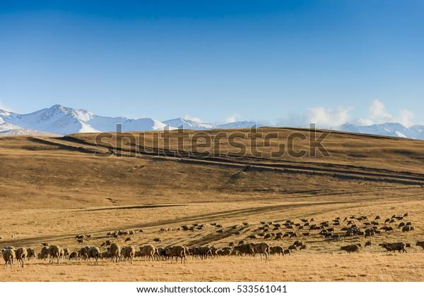 Steppe Kazakhstan, Trans-Ili Alatau, plateau Assy near Almaty city