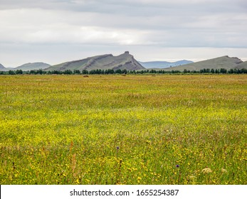Steppe in Khakassia in August. The hills in the steppe are similar to the waves of the ancient sea, the bottom of which this steppe was millions of years ago. Khakassia, Siberia.