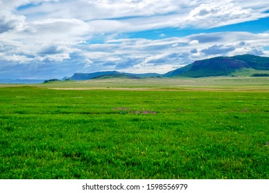 Steppe of Khakassia in early June. Young grass looks rich green. In the steppe, flowers are just beginning to bloom. Siberia, Russia