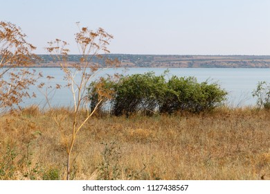 steppe and Lake