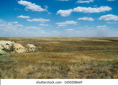 Steppe landscape. Lonely green plants on dry, hot sand.The steppe is woodless. Ravine in the steppe.
