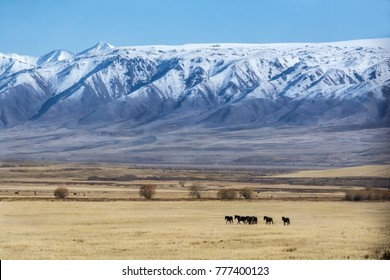 Steppe, a large area of unforested grassland with domestic horses at foreground and Tian Shan mountain ranges in background, Chaek village, Jumgal district, Naryn region, central Kyrgyzstan.