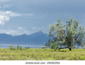 steppe, prairie, veld, veldt. synonyms: plains, grasslands. open, uncultivated country or grassland