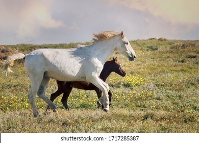 Steppe Tatar horses with traditionally clipped tails. White gray horse with a chestnut colt in the Tatar village. Crimea, August steppe