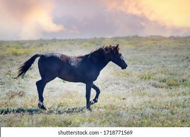Steppe Tatar horses with traditionally clipped tails. A young Mare. Crimea, August steppe