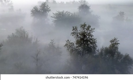 Steppe. Trees in morning fog. Top view. Soft focus background