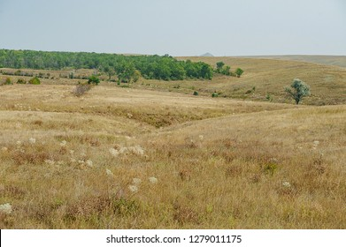 The steppe is woodless. Ravine in the steppe. Veld Ukraine. Forest of the steppe landscape. Forest formation. Poor in moisture. Grass vegetation in the dry climate zone.