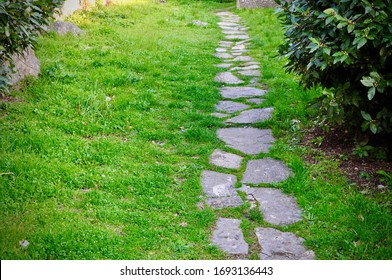 Stepping stone path in lawn in sun with evergreen grass ground cover, an inviting beginning of a history